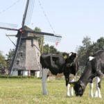 нидерландия, холандия