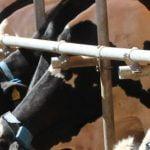 крави –
