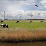 нидерландия, крави